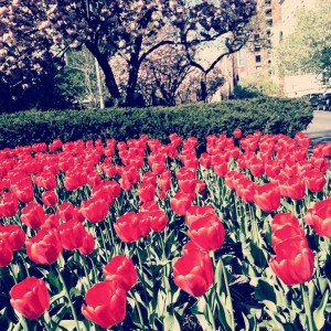 -field-of-red-tulips-02